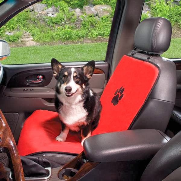 photo of everything for the active dog that loves travel