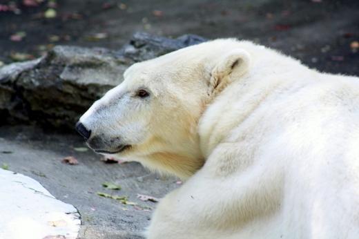 Photo by Piotr Krasuski for Zoo-Rama Aquarium