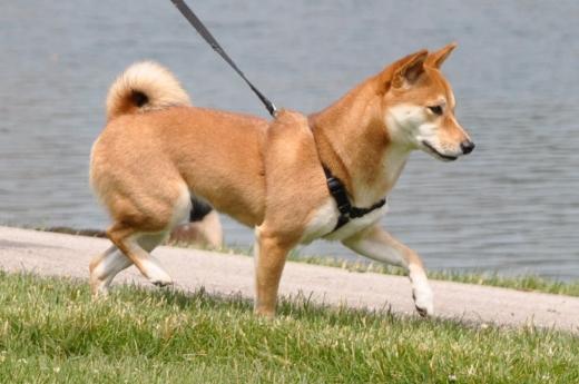 Photo by Pet Spa Resort & Dog Training Center for Pet Spa Resort & Dog Training Center