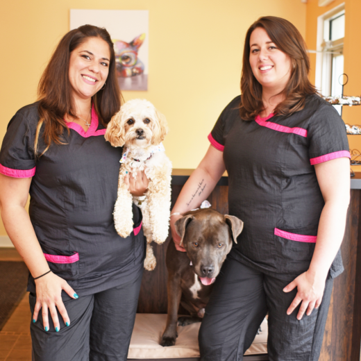 Photo by Precious Paws and Claws Dog Grooming Salon for Precious Paws and Claws Dog Grooming Salon
