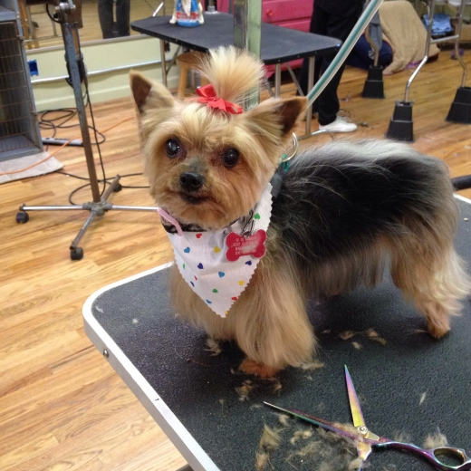 Photo by Hollywoof Grooming Salon for Hollywoof Grooming Salon
