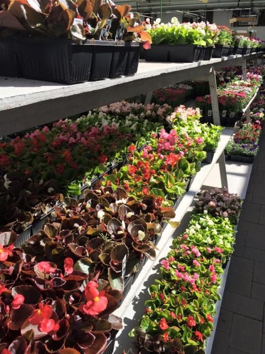 Atlantic Nursery & Garden Shop in Freeport City, New York, United States - #3 Photo of Food, Point of interest, Establishment, Store, Home goods store